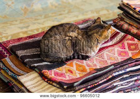 cat sitting on rugs