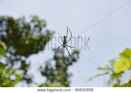 spider on the web in the wood