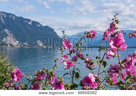 Flowers Against Mountains And Lake Geneva