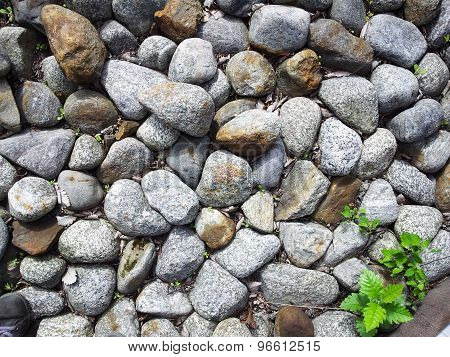 Rocks and plant