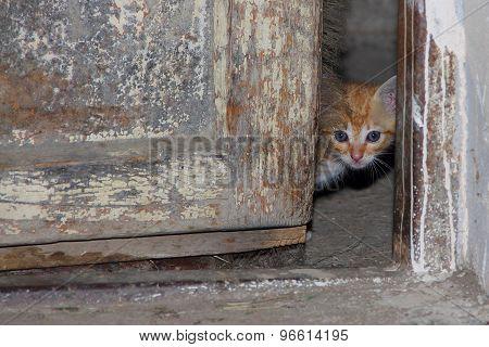 kitten snapshot
