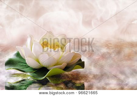 Water Lily Floating In Warm Water Horizontal Composition