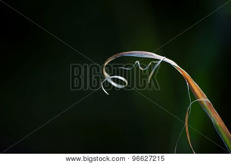 Curved blade of grass