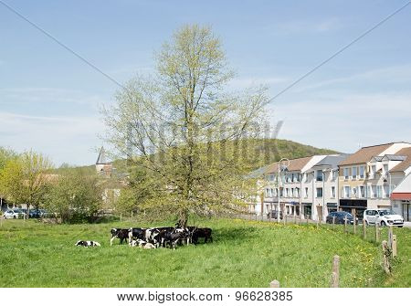 Herd of cows in the Paris suburbs, a few kilometers from Paris (France)