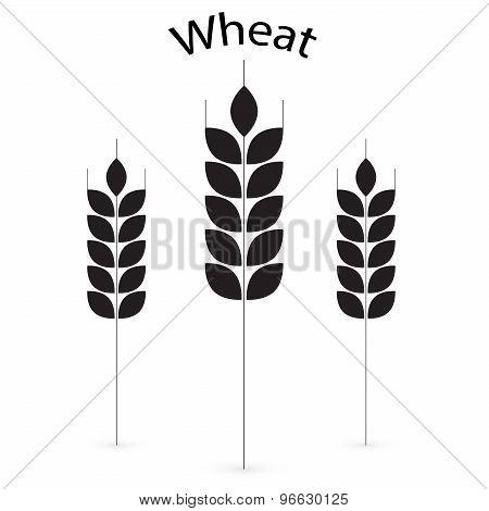 Ears of Wheat, Barley or Rye vector