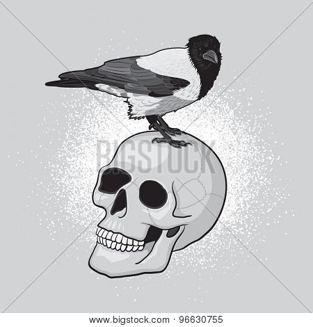 Crow Bird on the Human Skull