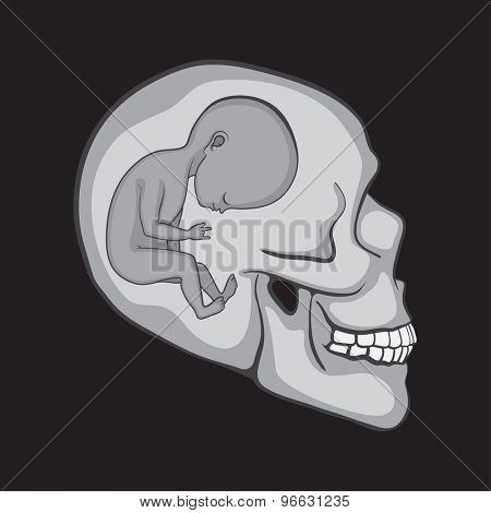 Fetus Inside of the Human Skull