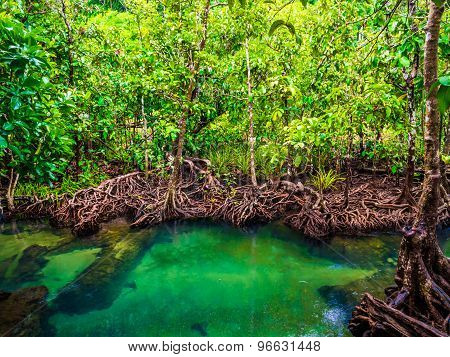 Mangrove Forests With Turquoise Green Water In The Stream