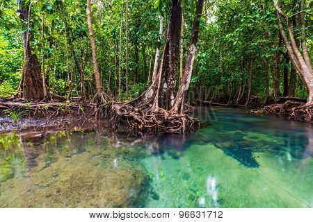 Mangrove Trees With The Turquoise Green Water Stream
