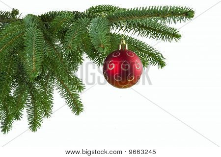 Red Ball On Spruce Branch