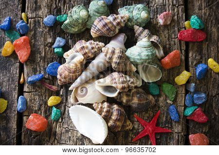 Seashells, Shell, Clams With Colored Stones On A Wooden Table