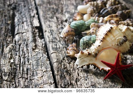 Seashells, Shell, Shellfish, Starfish On Wooden Background Close-up Selective Focus On The Right