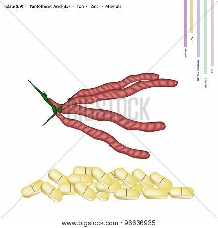 Kidney Bean Pods with Vitamin B9 and B5