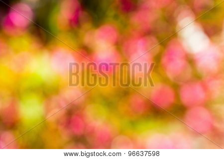 Pink, Yellow, Green Defocused Bokeh Abstract Background
