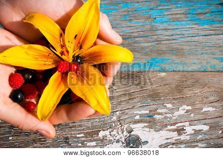 Hand Holding Currants, Raspberries, Gooseberries, Yellow Flower On A Wooden Background