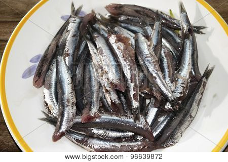 Fresh Anchovies Of Market