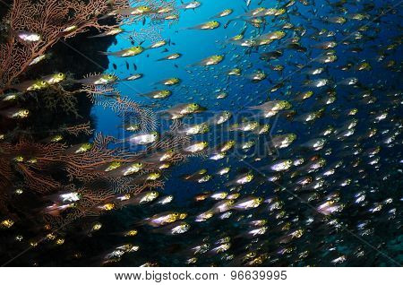 Glassfish School