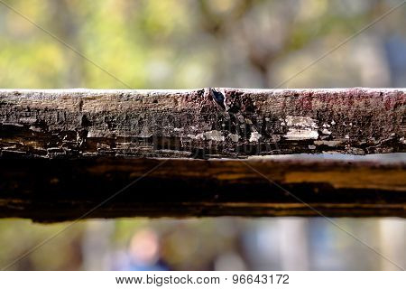 Rotted board