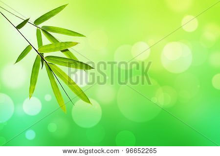 Bamboo leaf and Green nature light bokeh background