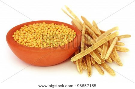 Golden Mustard With Empty Pods