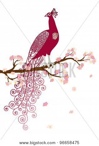 Vector illustration of abstract purple peacock on the pink blossom tree branch on white background