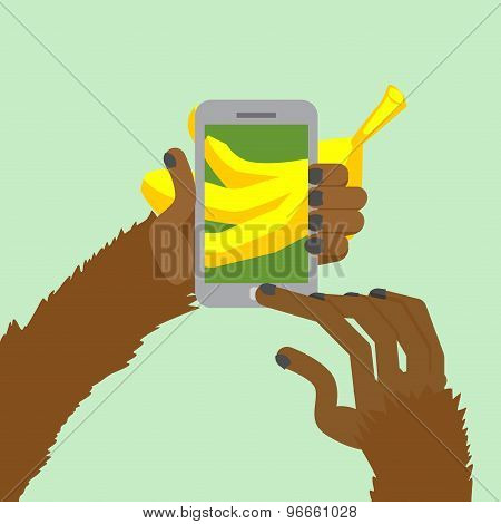 Monkey Banana Shoots. Posting To Internet A Photo Of  Food. Animal Clicks To Your Smartphone With Yo