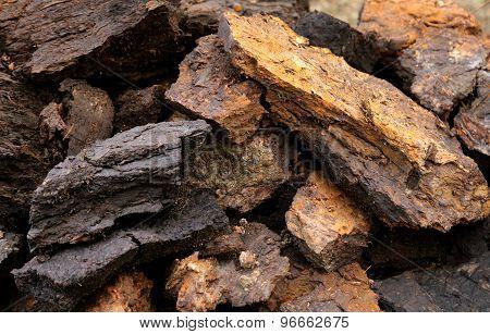 Soem Bloks At Peat Field