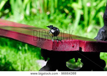 Bird tit standing on a bench.
