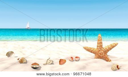 Shells and starfish on a sandy beach