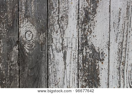 Background of wall birch wood