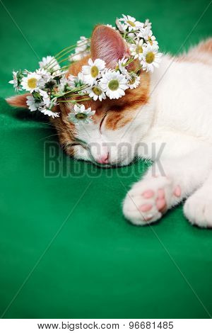 cat with floral wreath