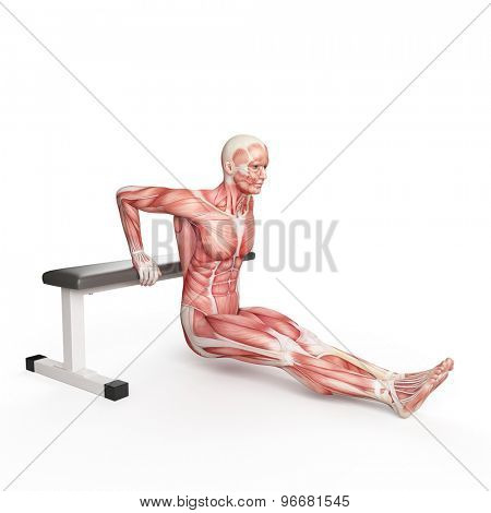 exercise illustration - bench dip