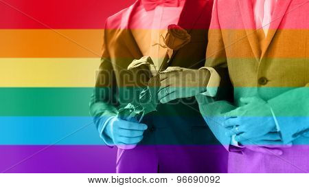 people, homosexuality, same-sex marriage and love concept - close up of happy male gay couple with red rose flower holding hands on wedding over rainbow flag stripes background