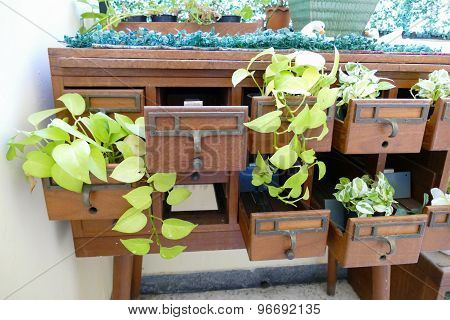 Plant In The Pot Decorating On Old Wooden Desk Drawer