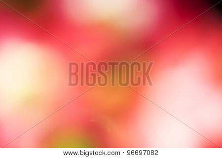 Azalea Flowers Being Blurred.