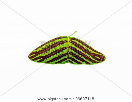 Single Isolated Leaf On A White Background