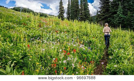 Hiking through Alpine Flowers at Tod Mountain