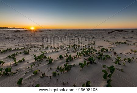 Sand Plains On The Beach At Dawn