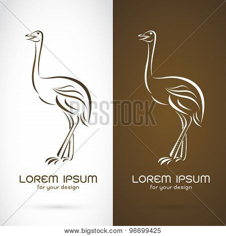 Vector Image Of A Ostrich Design On White Background And Brown Background, Logo, Symbol
