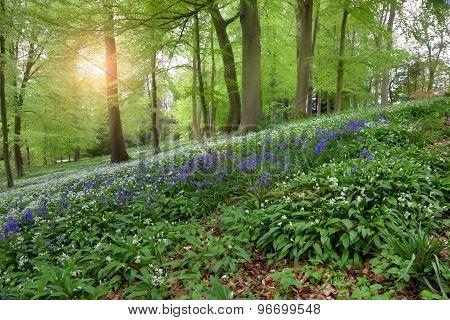 Spring Woodland, England