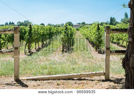 Break Fence In Stone In Front Of Vineyard For Bordeaux's Red Win