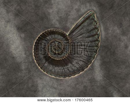 An image of a nice shell petrification