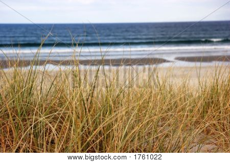 Beach Grass Overlooking The Ocean