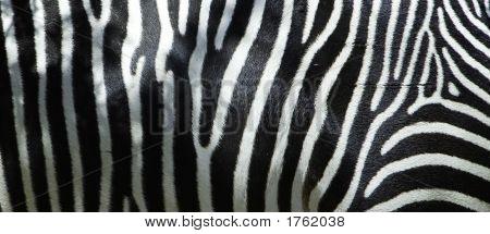 Zebra Flank