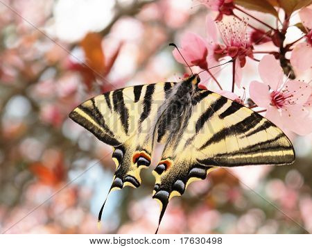 Beautiful Butterfly Papilion On The Flowers Of Tree