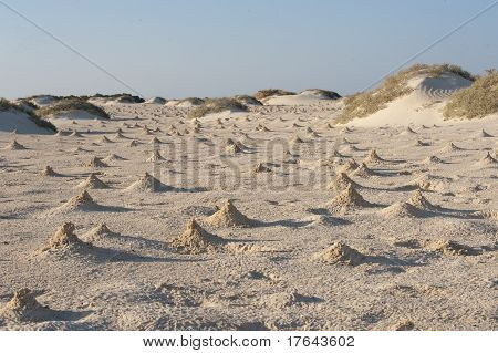 Dunes And Mounds Made By Fiddler Crabs On Beach