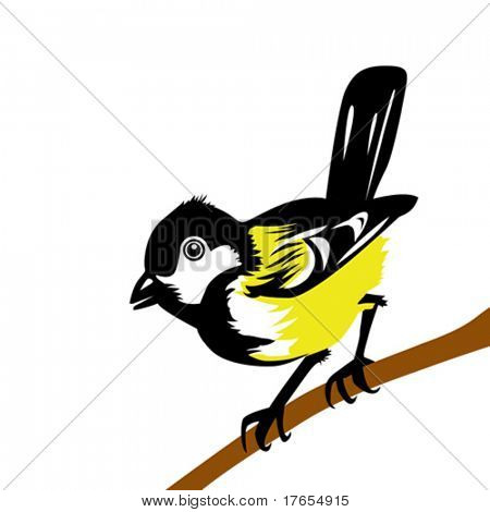 vector drawing tomtit on white background