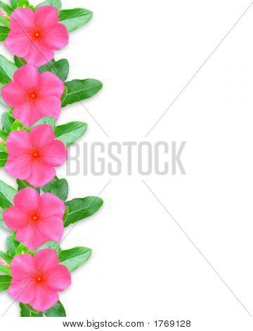 Pink Periwinkle Border