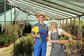 stock photo of leghorn  - Male and female gardeners holding flower pots in a garden - JPG