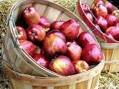 image of apple orchard  - Two bushel baskets full of beautiful red apples - JPG